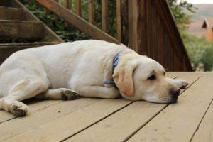 Dog on Deck